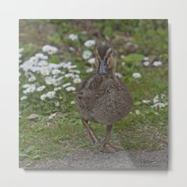 Duckling and Daisies Metal Print