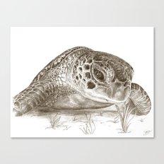 A Green Sea Turtle :: Earthtones Canvas Print