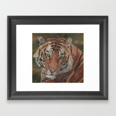 Bengal Tiger Framed Art Print