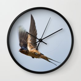 Male barn swallow in flight Wall Clock