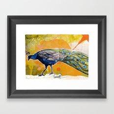 Pavone Framed Art Print