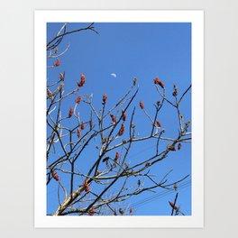 sumac moon Art Print
