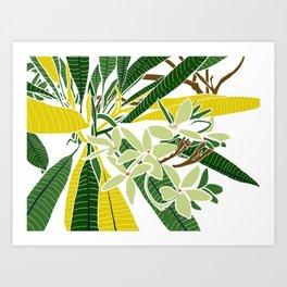Frangipani charm Art Print