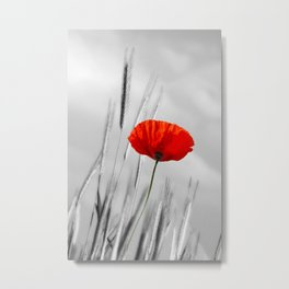 Poppy Red 070 Metal Print