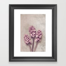 Lovely pink Hyacinths Framed Art Print