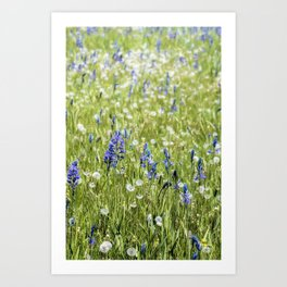 Camas and Dandelions Art Print