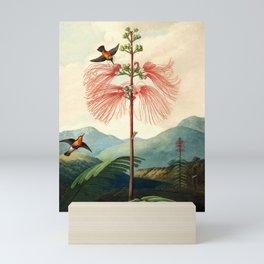 Large flowering sensitive plant. Mini Art Print