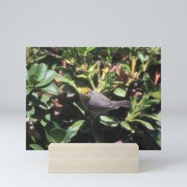 Small Verdin Mini Art Print