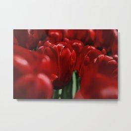Tulipes a NY Metal Print
