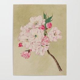 Fukurokuju - God of Longevity Cherry Blossoms Poster
