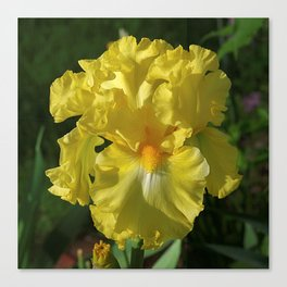Golden Iris flower - 'Power of One' Canvas Print