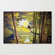 Turtle Talent 1 of 3 Canvas Print