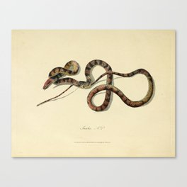Snake by Sarah Stone, 1790 Canvas Print