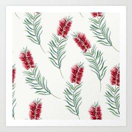 White Bottlebrush Art Print