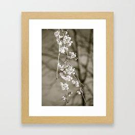 Stages of Spring Framed Art Print