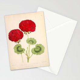 Double Zonal Pelargonium Vesta Vintage Flower Stationery Cards