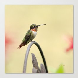 Tiny Hummingbird Canvas Print