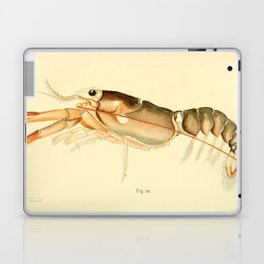 Vintage Baby Lobster Illustration (1895) Laptop & iPad Skin