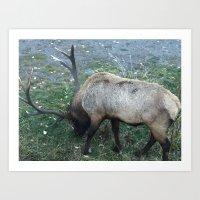 Lone Elk Art Print