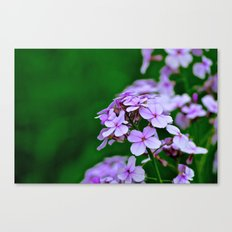 April Showers Bring.... Canvas Print