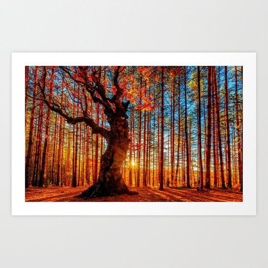 Majestic woods Art Print