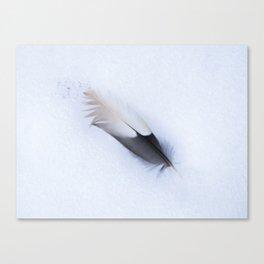 Fallen Feather Canvas Print