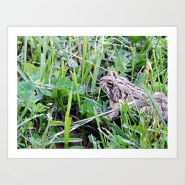 The Waiting Frog Art Print