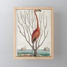 Vintage Flamingo Print Framed Mini Art Print