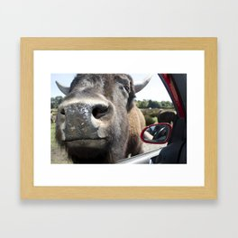 Intrusive Buffalo Framed Art Print