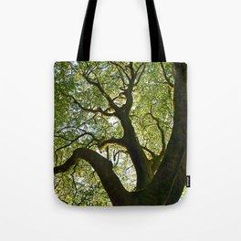 Beech Tree Canopy 2 Tote Bag