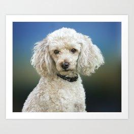 Poodle Puppy Art Print
