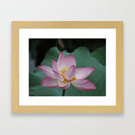 Hangzhou Lotus Framed Art Print