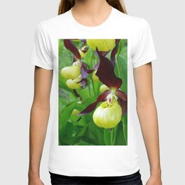 Rhode Island Wild Orchid Black and Yellow Lady Slippers T-shirt