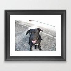 Black Lab Camera Pose Framed Art Print