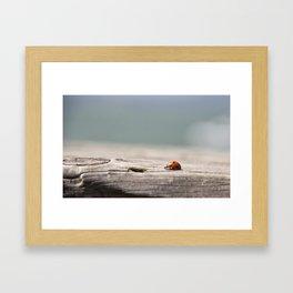 Bayside Bug Framed Art Print