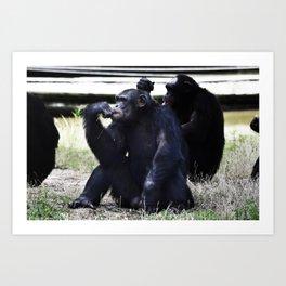 Social Apes Art Print