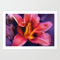 lily Art Prints featuring  Lily. by Mary Berg