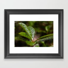 Drops of Heaven Framed Art Print