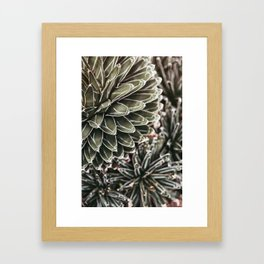 Cactus Study #3 Framed Art Print