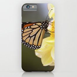 Longwood Gardens Autumn Series 406 iPhone Case