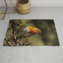 European Robin Donegal Ireland 87 Rug