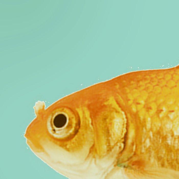 unicyle goldfish III Leggings