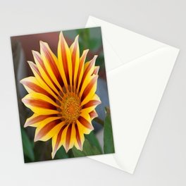 Single Flower Close Up Gazania Red Stripe Stationery Cards