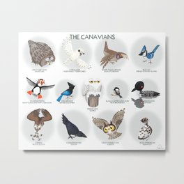 The Canavians - Birds of Canada Metal Print