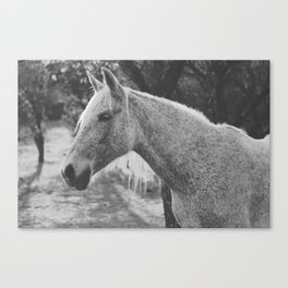 Horse IV _ Photography Canvas Print