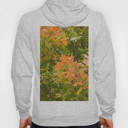 Fall Leaves 2 Hoody
