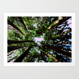 Circle of Trees Art Print