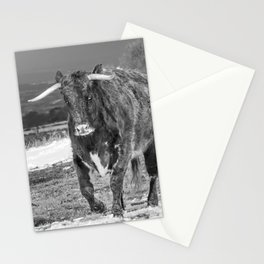 English Longhorn Black And White Stationery Cards