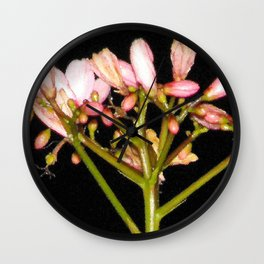 Flowering Pink Jatropha Wall Clock