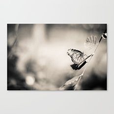Black and White Butterfly. Canvas Print